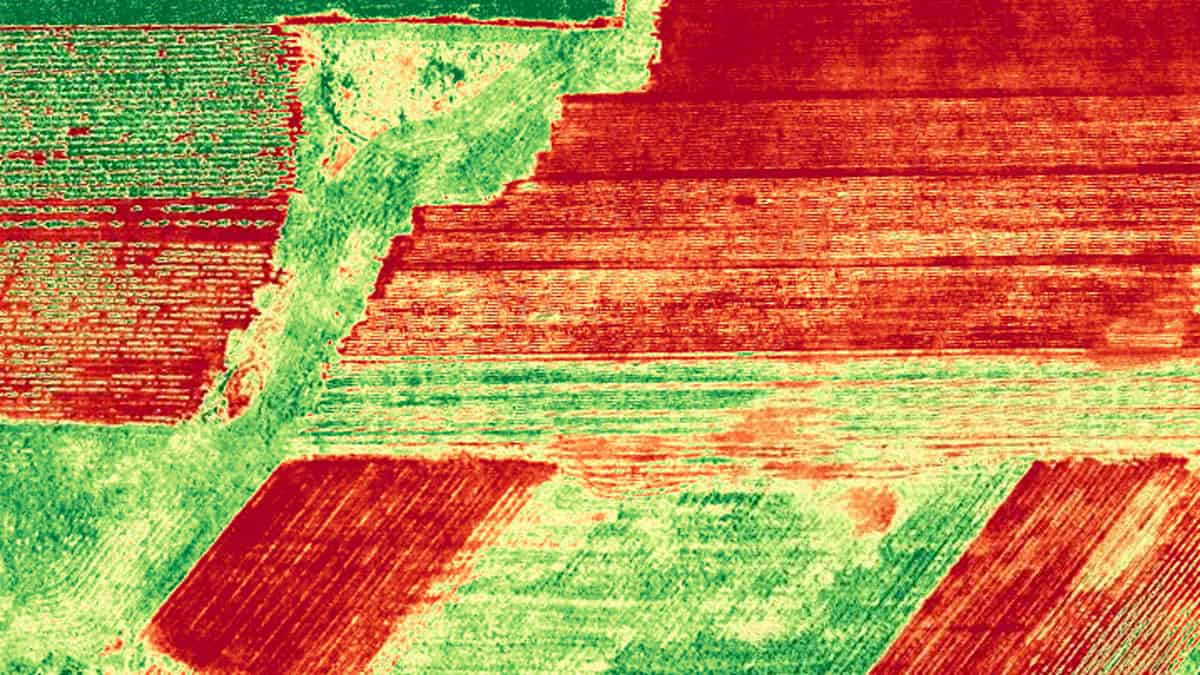 NDVI orthomosaic image of corn field